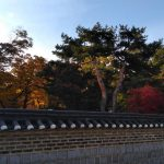 Autumn @ Changdeokgung palace, huwon secret garden