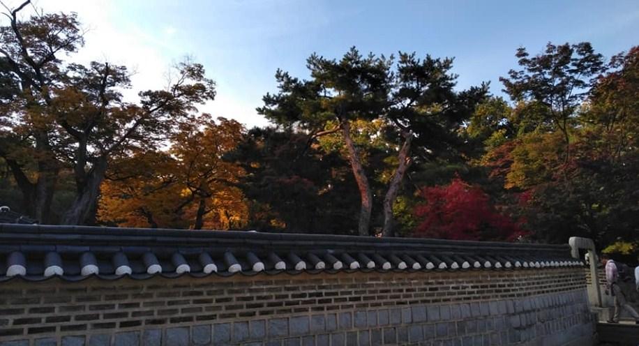 Autumn @ Changdeokgung palace, huwon secret garden