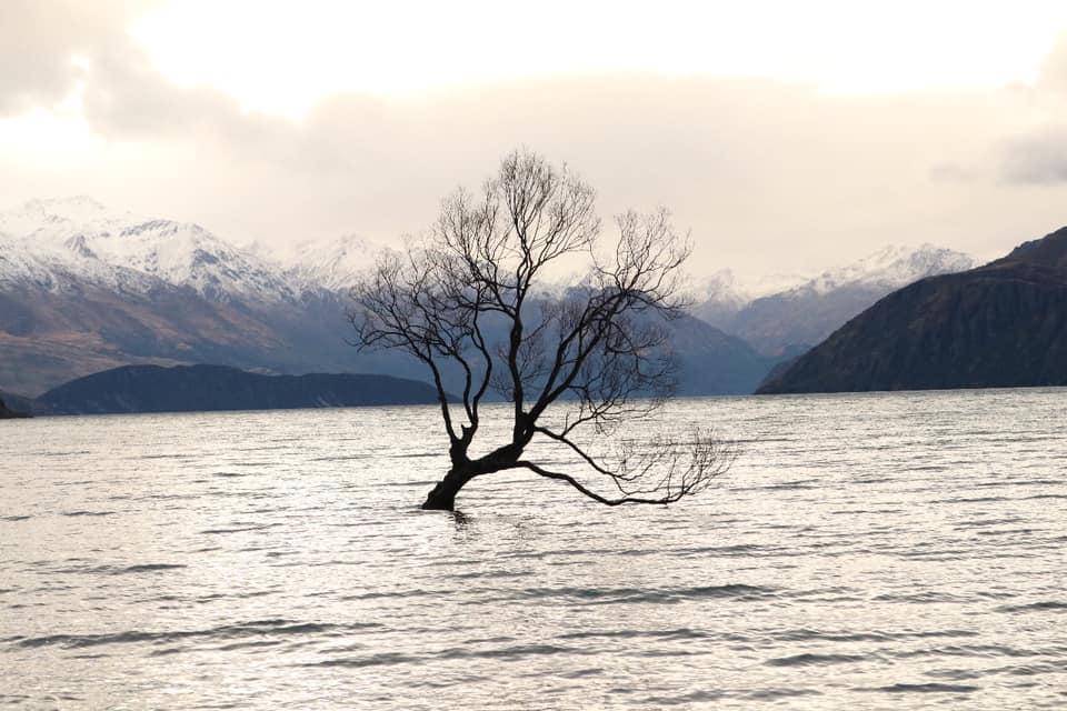 That wanaka Tree. Pohon ditengah danau